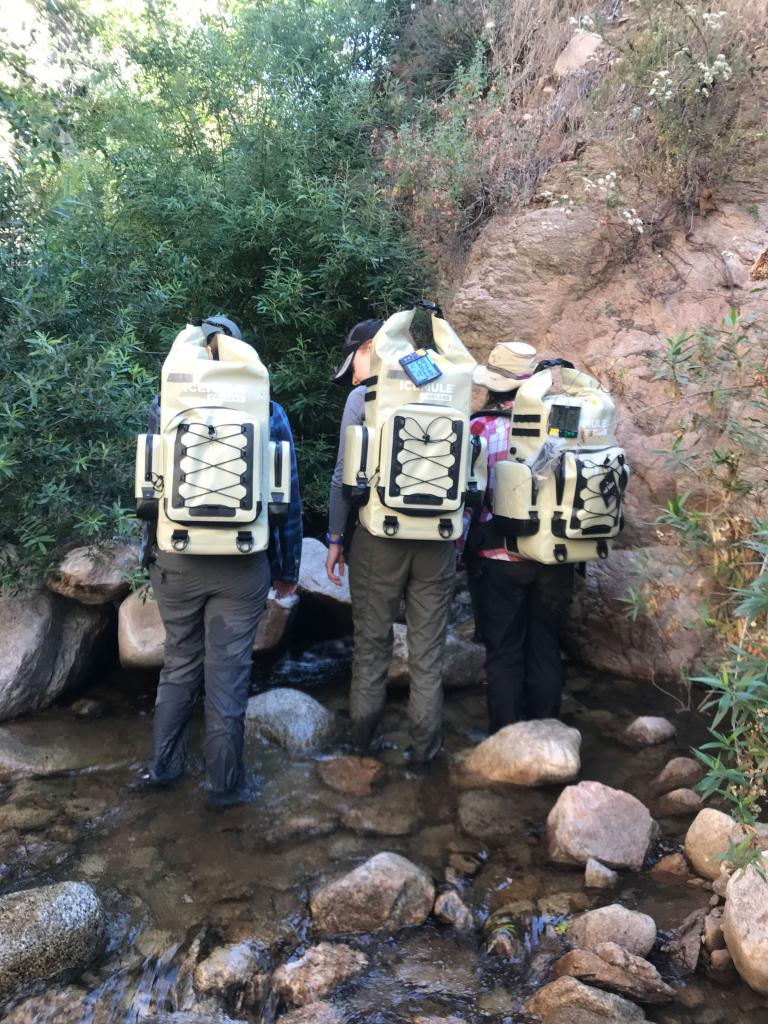 The insulated backpacks used to transport frogs to the release sites.