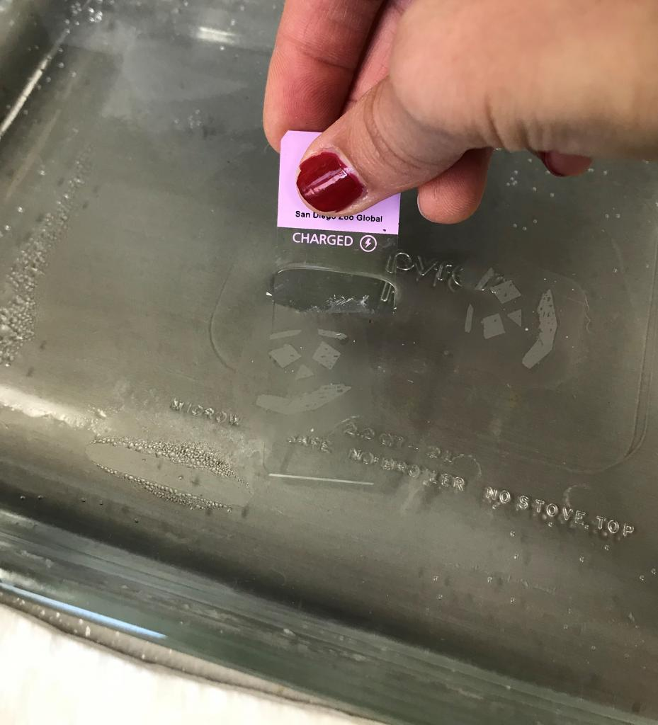 Thin tissue ribbon being floated in a warm water bath and picked up by a glass slide.