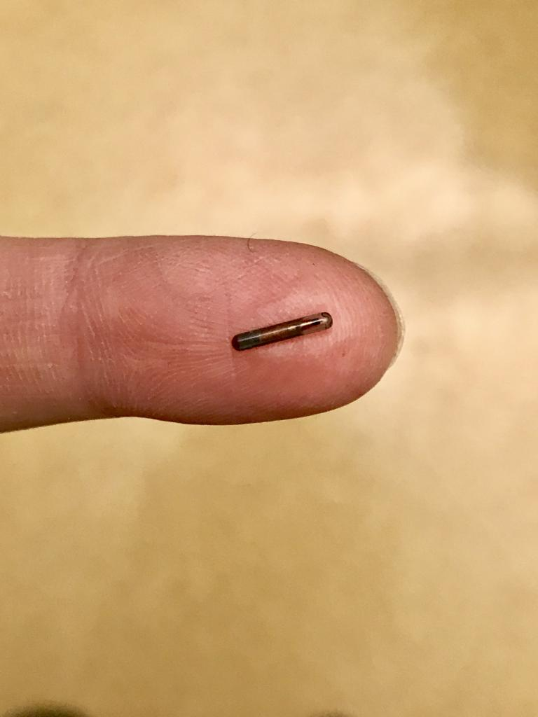 One of the microchips used to tag the frogs (called a Passive Integrated Transponder, or PIT tag).