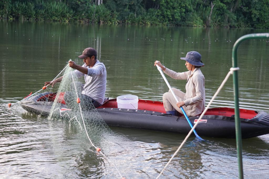 The Giant Otter Conservation Project's Peruvian field assistants examine the catch during a net sampling session in Manu National Park.